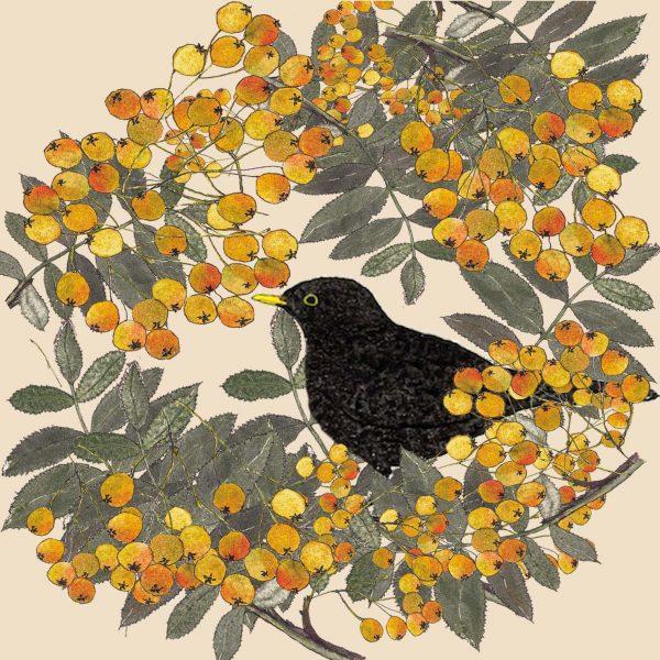 16064-blackbird-in-the-berries