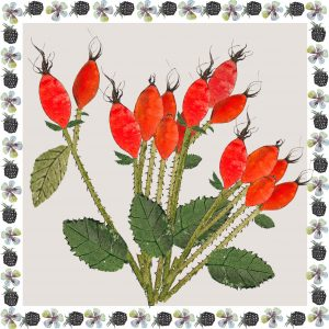 16074-rose-hips