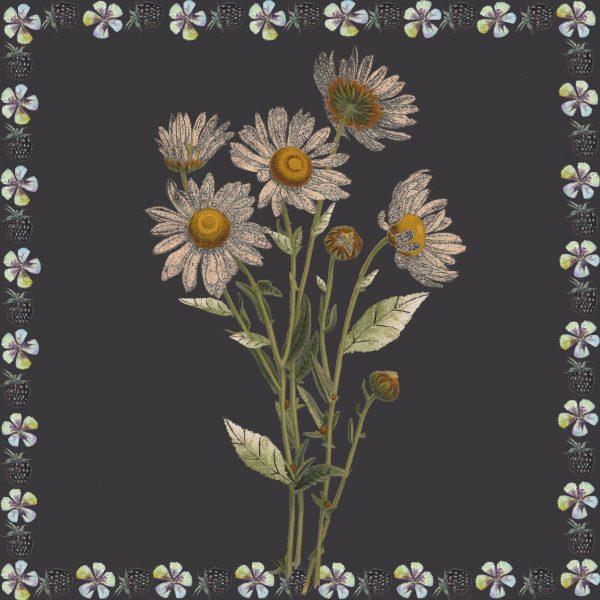 17014 Daisy Black 2