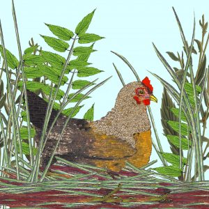 17058 Spring Chicken